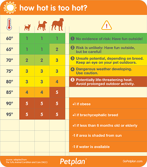 what temp is too hot for dogs? dog dehydration chart