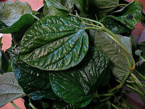"Photo: ""bai chaploo"" (wild pepper leaves) for ""miang kam"""