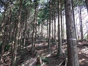 京ヶ峯への登りに