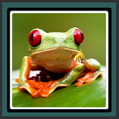 Live Wallpapers – Frog