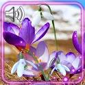 Spring Snow Flowers icon