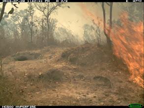 Photo: A late fire Uma queimada tardia