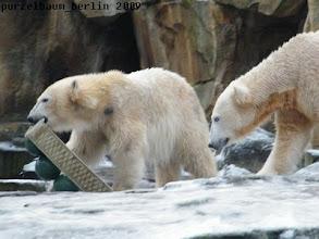 Photo: Gianna ist mit Spielzeug unterwegs - da muss Knut hinterher ;-)