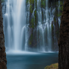 The Falls Between the Trees by Mike Lee - Landscapes Waterscapes ( nature, burney falls, water, water fall, slow shutter, burney creek, falls, creek, moving water, outdoors, waterfall, slow exposure, river, shasta county,  )
