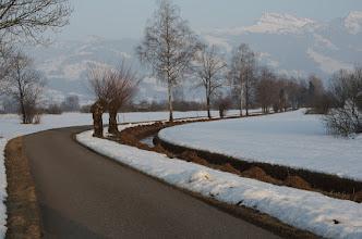 Photo: Kaltbrunner Riet, Switzerland
