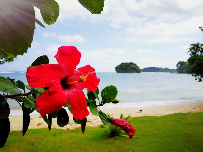 Un fiore per te  di SaraC