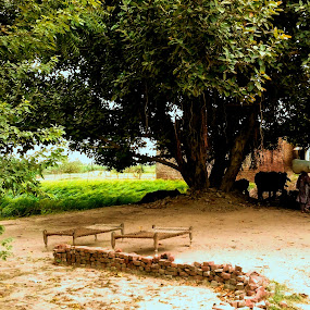 Peaceful village life by Muhammad Gujjar - Landscapes Weather ( peaceful, nature, village, fresh, greenery, relax, tranquil, relaxing, tranquility )