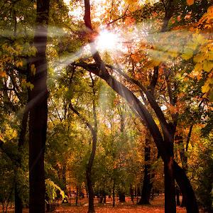 Autumn Park.jpg