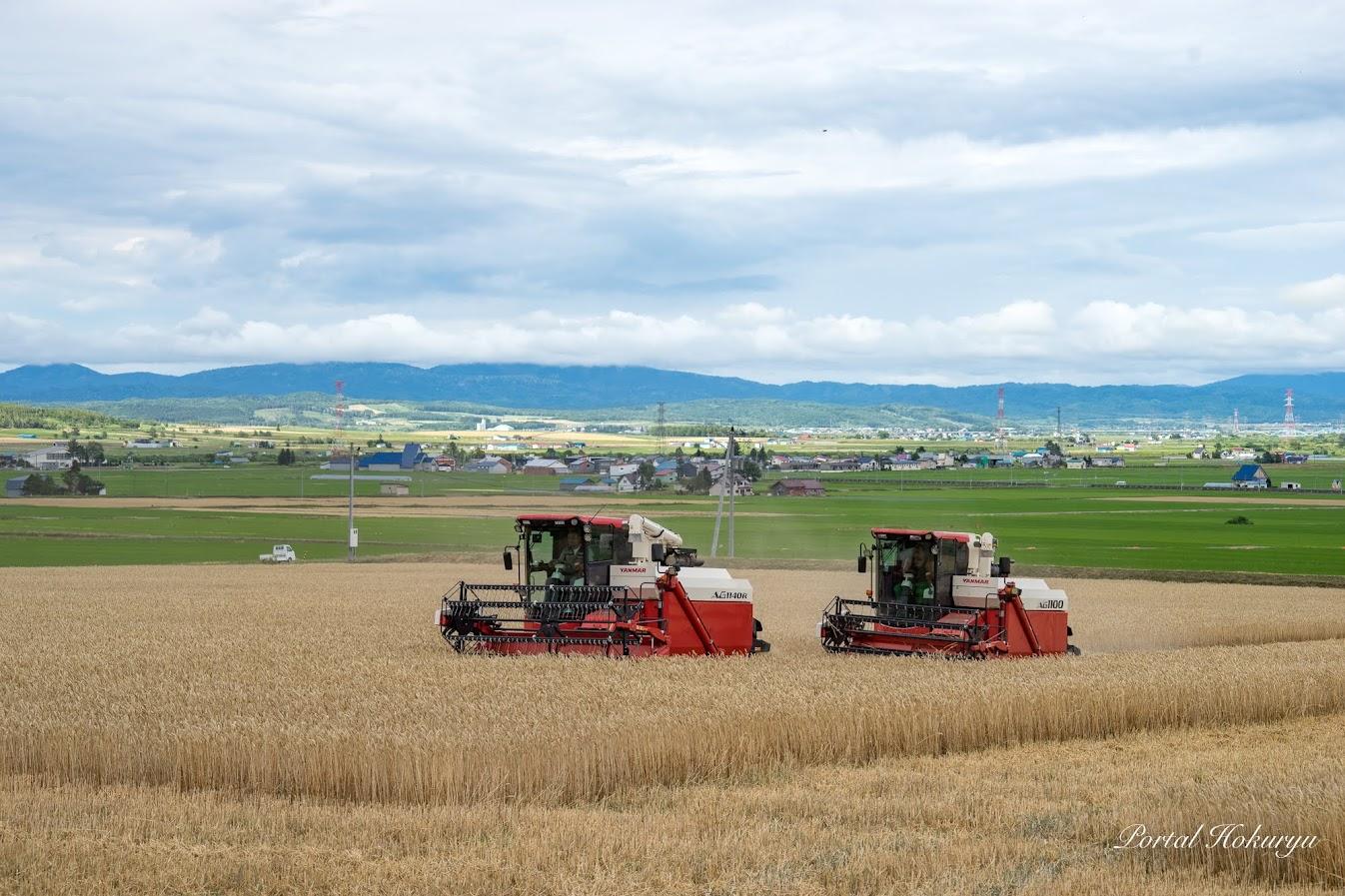 小麦刈りコンバイン出動!