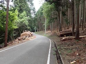 伐採した木材が多く積まれている