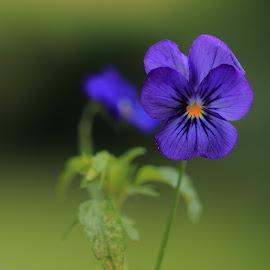 by Ove Andersen - Flowers Flower Gardens