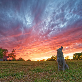Jack and the sunset by Ricky Niell - Landscapes Sunsets & Sunrises ( jack, sunset )