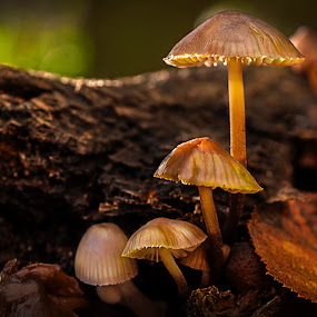 Dark Wood Fungi by Mark Shoesmith - Nature Up Close Mushrooms & Fungi ( macro, fungi, nature, green, light )