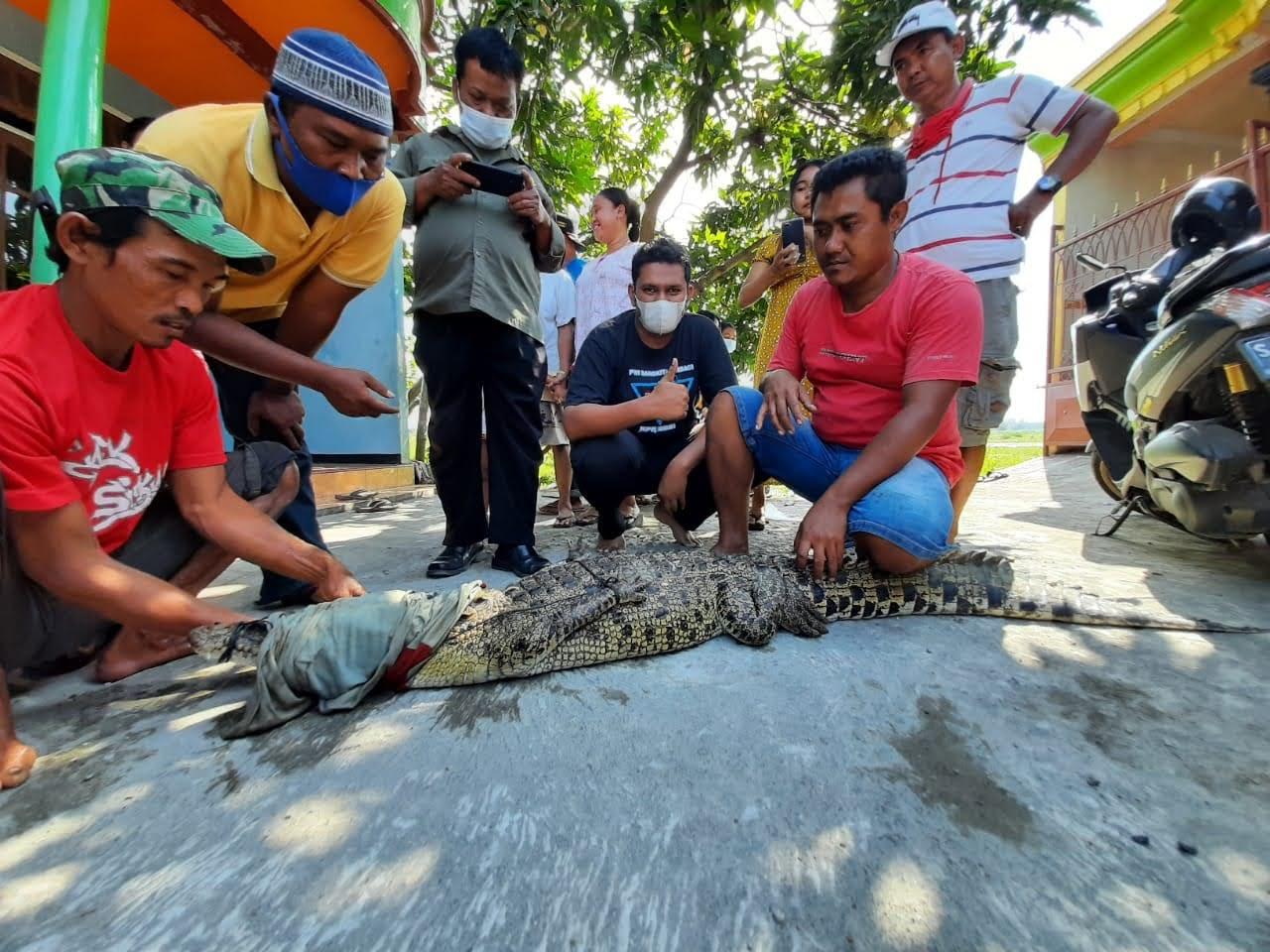 Menjala Ikan Warga Mojokerto Malah Dapat Bajul