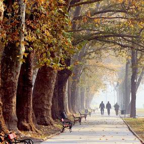Troika by Emil Chuchkov - City,  Street & Park  City Parks