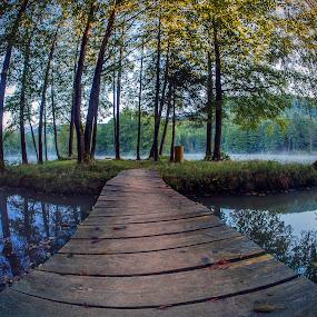 Bridge by Jaro Miščevič - Landscapes Waterscapes ( water, reflections, trees, lake, bridge, landscape )