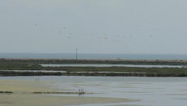 Photo: Flamingos in flight