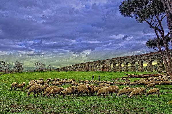 gregge e acquedotto nella campagna romana di Salvatore Ferrante