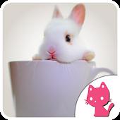 Beautiful Rabbit Background