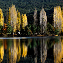 Patagonia by Juan de Simone - Landscapes Forests ( travel photography, green, reflection, lake, trees, colorful,  )
