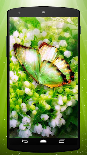 Green Butterfly Live Wallpaper
