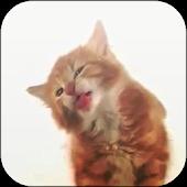 Cat Licks Video 3D Wallpaper