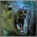 Boar Sounds icon