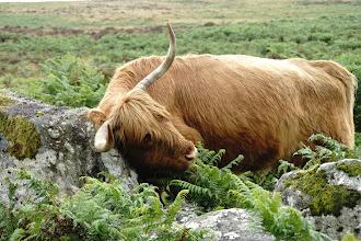 Photo: Dartmoor NP