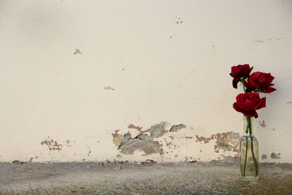 Roses. di Anna Sparacino