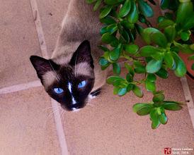 Photo: BASATI,  la gata autoadoptada - Ferran Cerdans Serra, escriptor autor-editor a www.llibres-artesans.com