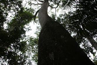 Photo: Sademetsässä puut olivat korkeita