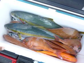 Photo: オオツさんもヒラス2本に真鯛、ヤイトカツオ・・・大漁でした!