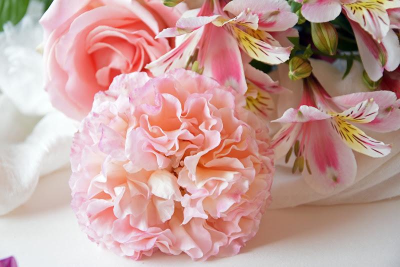La delicatezza delle rose  di Ingles Alberti