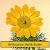 Heilpflanzen / Heilkräuter file APK for Gaming PC/PS3/PS4 Smart TV