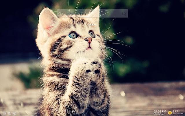 Download 900 Koleksi Wallpaper Hd Kucing HD Terbaik