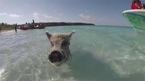 Sailing the Bahamas thumbnail