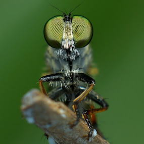 GREEN RF by Ayoe Artstudio - Animals Insects & Spiders