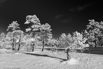 Photo: Snow covered trees a  cold and sunny winter day in Herstadhei, Røyken, Norway (this is not infrared!)