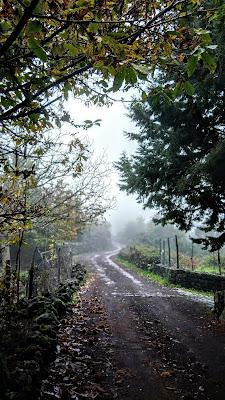 Autumn fog di Fiore.G