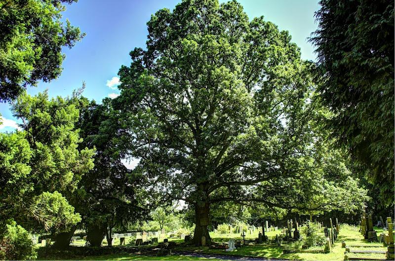 Fruit Tree di Tauri41
