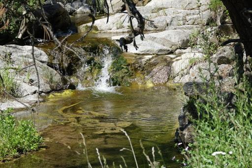 June Nature Walk: Anne U. White Trail — 'A green and pleasant place'