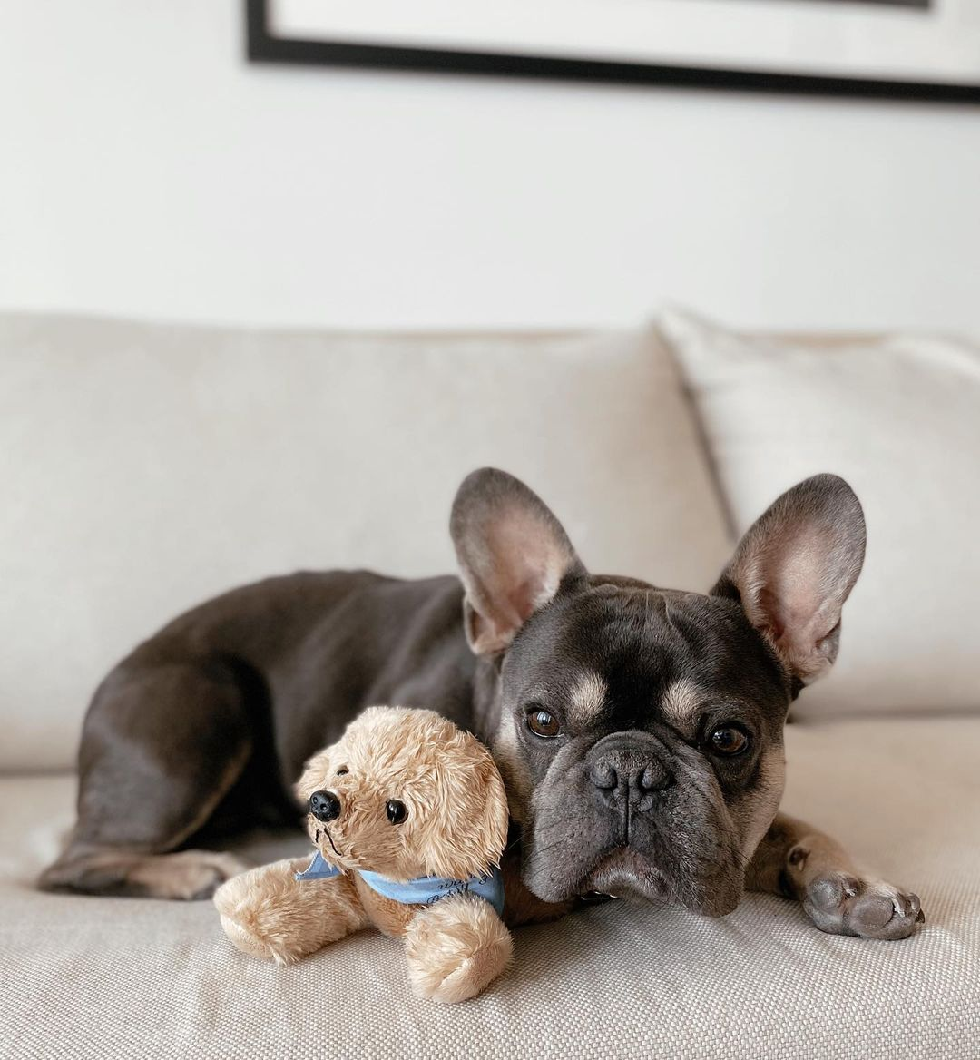 a dog lying down with a stuffed toy dog