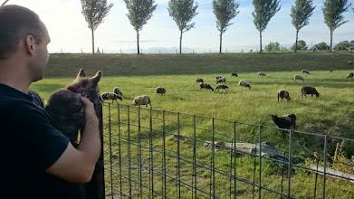 Photo: Twee dames (Marlou (Meaghan) en Maxima (Maggy)) hebben bij de schaapjes gekeken en nog even met de Yorkshire terriër gespeeld.