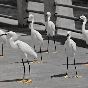 by John Kellaway - Animals Birds