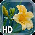 Желтый цветок Живые Обои icon