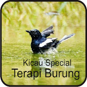 Kicau Special Terapi Burung