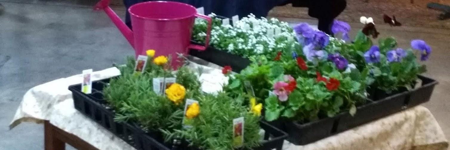 Pushing up Petunias!