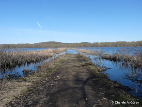 Photo: Receding flood waters