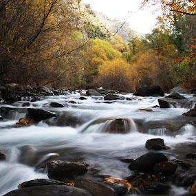 Autumn River by Cornelis Cornelissen - Nature Up Close Water ( moving water, orange, stream, autumn, riogenil, river,  )