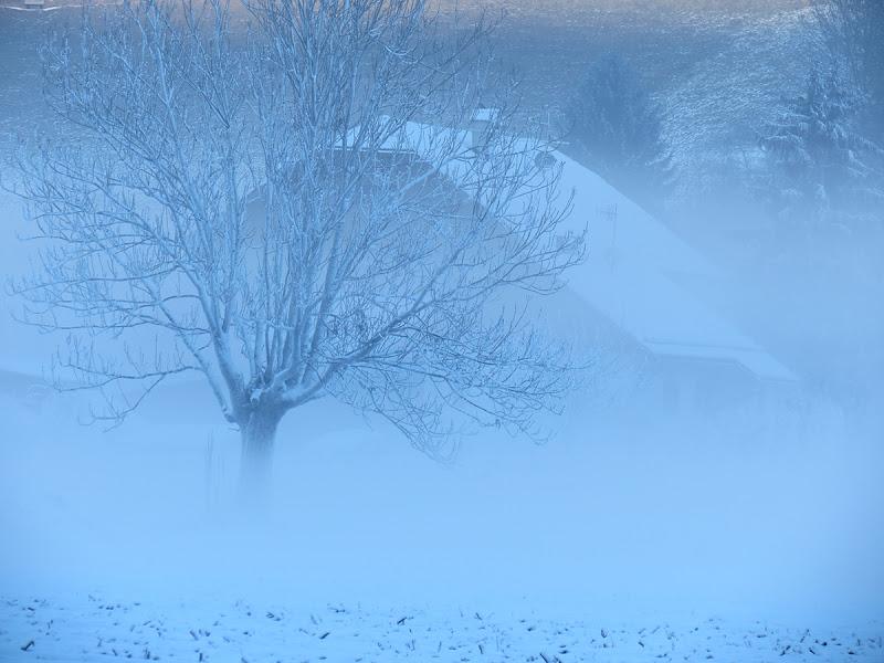 Nascosti nel freddo di EmmaPhotos